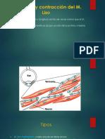 Excitación y contracción del M liso.pptx