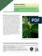 Sin título (5).en.es.pdf