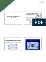 Alteraciones Morfológicas de Leucocitos