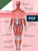 human being.pdf
