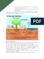 Ciclo Del Fósfor y Nitrogeno