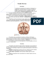 Histologia Tecido Nervoso e Tecido Muscular