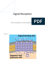signal reception  g proteins kinases