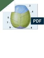 Software de Anatomia Dos Ossos