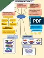 enzimologia clinica y cardiaco