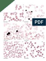 Color Plates (1-60).pdf