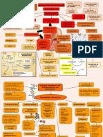 metabolismo de aminoacidos y enfer