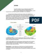 Resumen Biologia . CELULA. BACTERIAS.HONGOS Y LEVADURAS