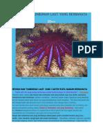 Hewan Dan Tumbuhan Laut Yang Beracun