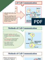 Neurotransmitter Cell Communication