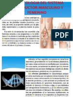 Farmacologia Del Sistema Reproductor Masculino y Femenino Pptx