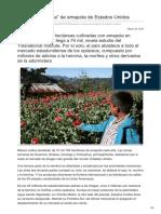 Contralinea.com.mx México la huerta de amapola de Estados Unidos.pdf