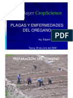 OREGANO BAYER_2.pdf