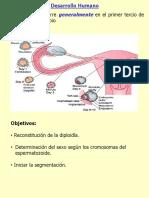 PPT Embriologia