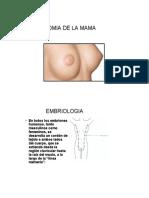 3 Anatomia 1