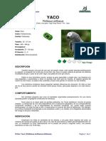 Ficha YACO _Psittacus erithacus erithacus_.pdf