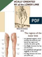 7. Lower Limb