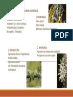 Division Lichenophyta_ Yesica
