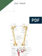 Musculos de La Pelvis
