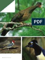 Las Aves Del PN Chaco (N&C16)