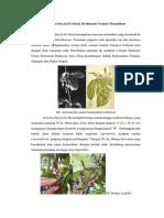 Aristolochia jackii Steud