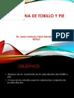 Anatomia de Pie