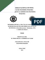 PES-GUE-SAL-15
