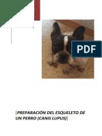 preparación del esqueleto de un perro.pdf
