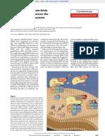 The Plasma Kallikrein-kinin System Counterbalances the Renin-Angiotensin System