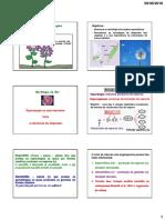 Morfologia Anatomia Flor A