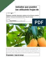 10 Enfermedades Que Pueden Ser Tratadas Utilizando Hojas de Mango