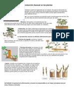 sistema reproductor asexual de las plantas