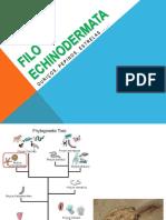 Zoologia Equinoderma