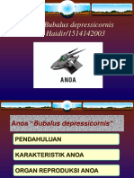 PPT ANOA