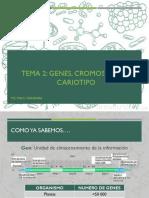Tema 2. Genes, Cromomas y Cariotipo