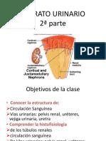Renal Aparato urinario