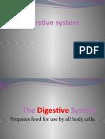 Typhoid Fever Stomach Pancreas