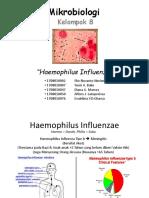 Kelompok 8 - Haemophilus Influenzae