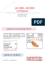 Ciclo Del Ácido Cítrico 2