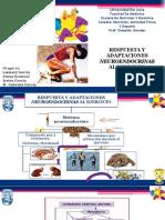Adaptaciones Neuroendocrinas en El Ejercicio