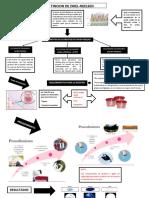 DIAGRAMA BACTERIOLOGIA