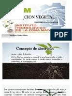 Nutricion vegetal-ppt.pptx
