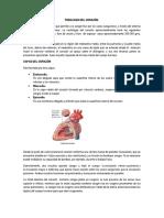 FISIOLOGÍA DEL CORZÓN IMPORTANTE.docx