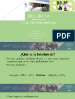 4  fotosíntesis.pptx