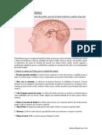 Tema El Cerebro y El Aprendizaje