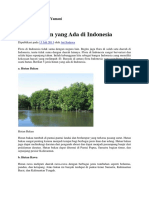 5 Jenis Hutan Yang Ada Di indonesia
