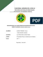 Informe Sobre El Cedro Colorado
