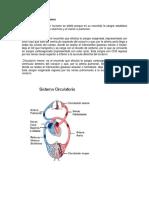 004 - Fisiología Del Sistema Vestibular