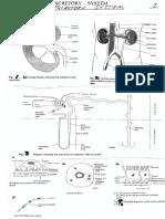 Excretory System 1