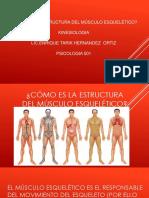 Cómo Es La Estructura Del Músculo Esquelético